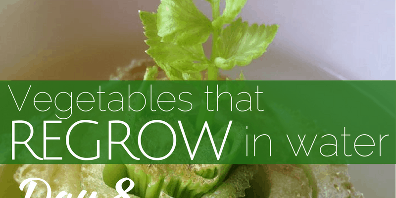 10 Vegetables That Regrow Using Only Water