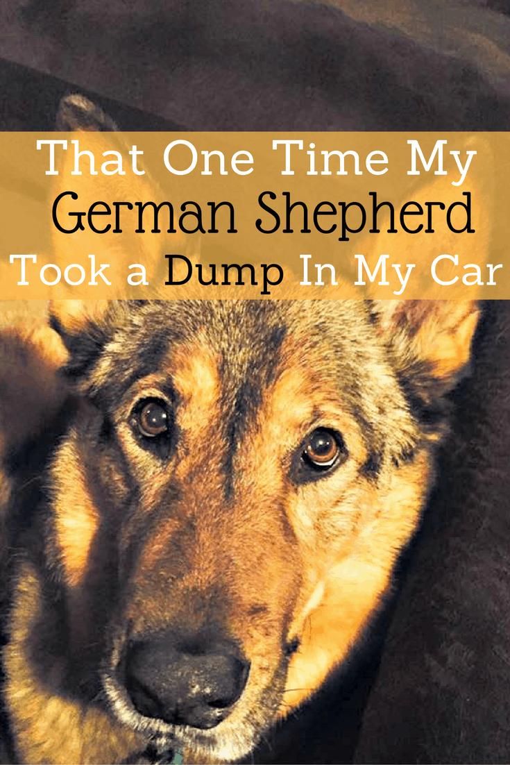 That One Time My German Shepherd Took a Dump In My Car