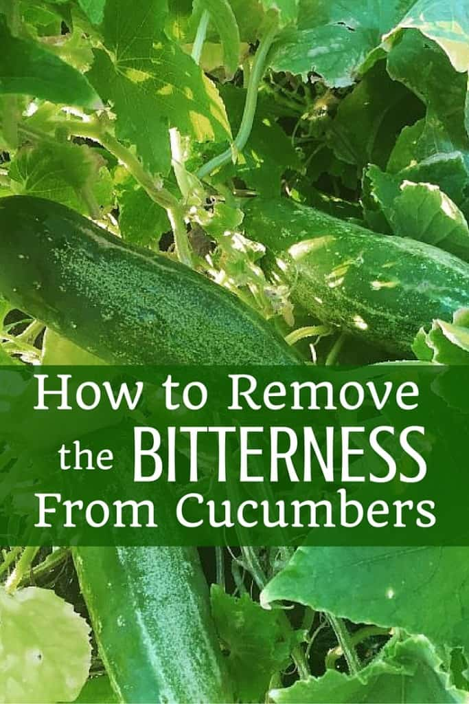 How to Remove the Bitterness from Cucumbers