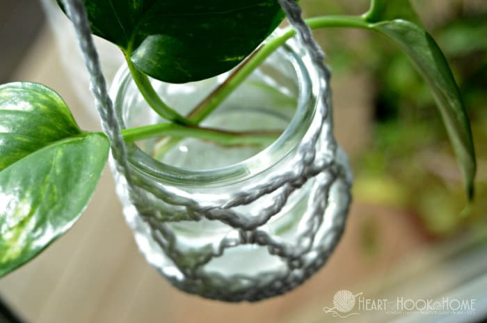 Hanging Houseplant clippings