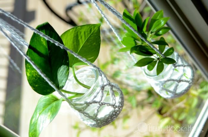 growing houseplant clippings using crochet