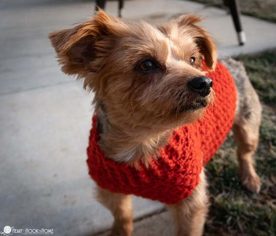 small size dog sweater pattern