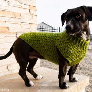 Dandy Dog Sweater Free crochet pattern