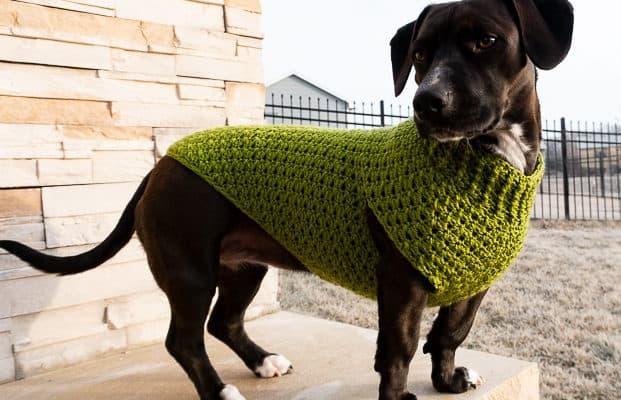 Dandy Dog Sweater Free crochet pattern