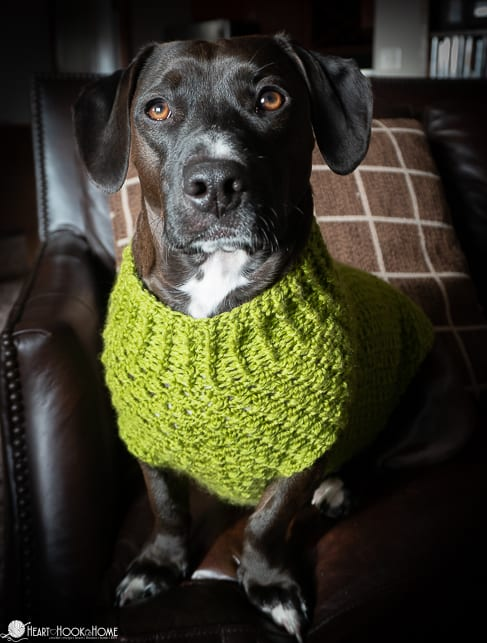 medium size dog sweater pattern