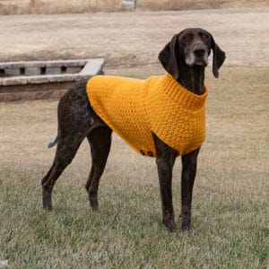 Free crochet dog sweater pattern tutorial for large dogs