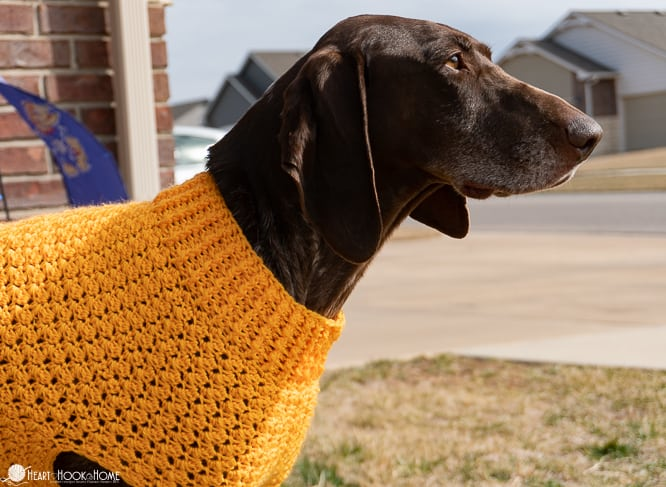 crochet large dog sweater tutorial