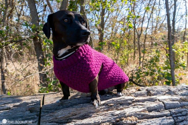 wiener pit bull sweater pattern