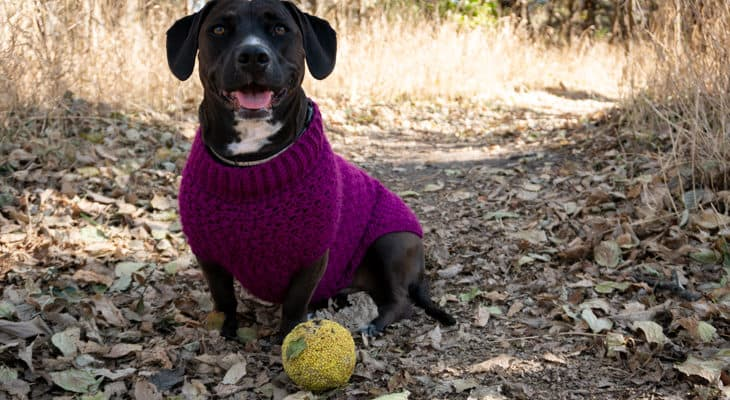 Stellar Dog Sweater free crochet pattern