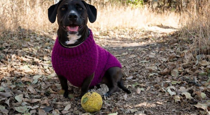 Stellar Dog Sweater free crochet pattern
