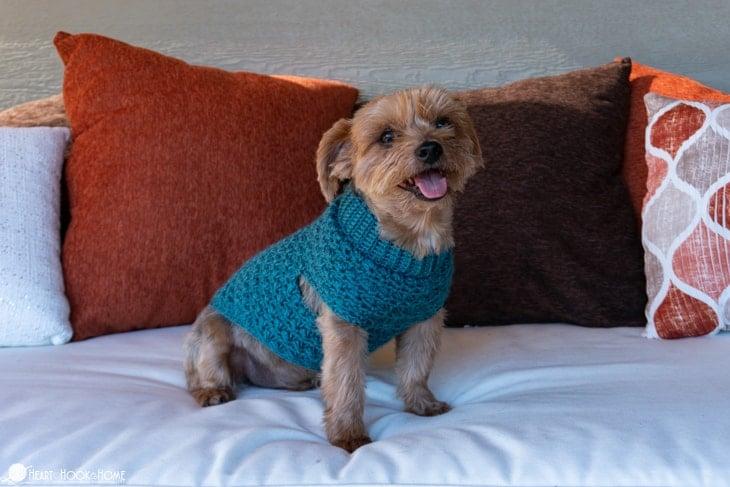 small size dog sweater pattern